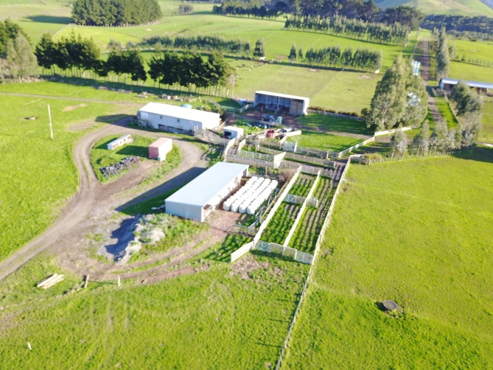 1740-top-grass-road-dannevirke