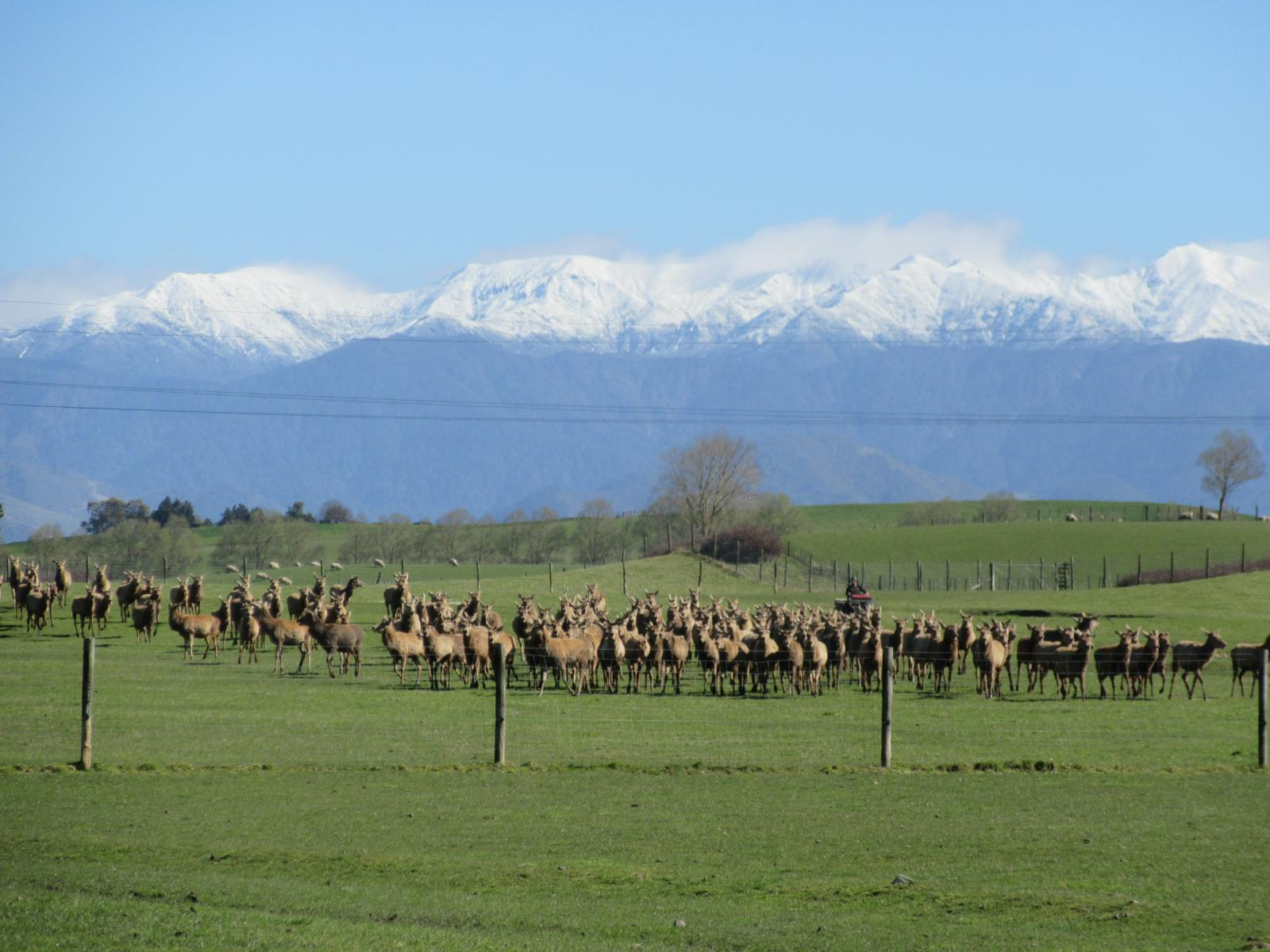 Central Hawkes Bay